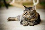 akcesoria dla kotów