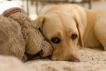 pies - zwierzak