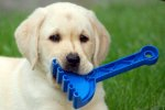 pies bawiący się